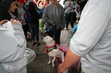 OR Heart Walk Dogs