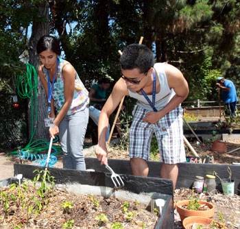 Incoming freshmen Sunny Brar, left, and Job Sy, worked in UCLA's community garden this summer. They were part of UCLA's first College Summer Institute, in which new students completed a couple of GEs and contributed to campus through civic engagement projects.