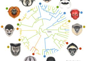 Faces of male primates from Central and South America