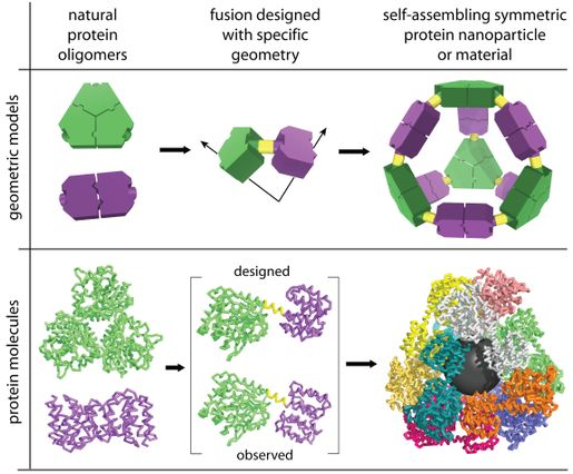 Creating the self-assembling molecular cage