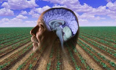 Parkinson's and pesticides