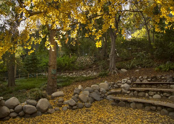 UCLA's Mildred E. Mathias Botanical Garden
