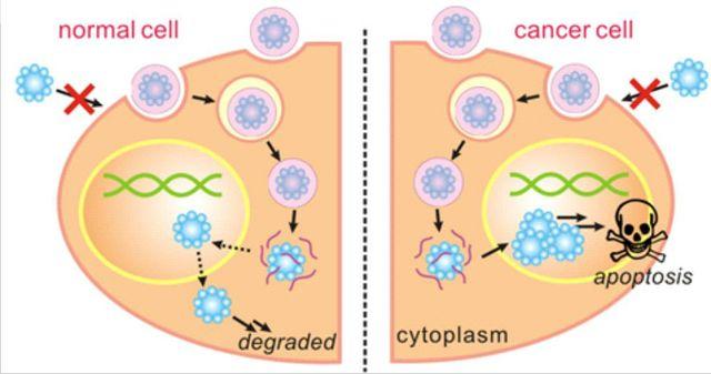 Nano-capsules and cancer