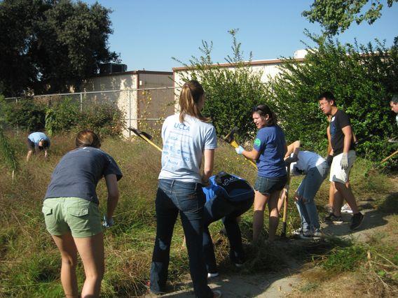 Gardening at Markham Middle School
