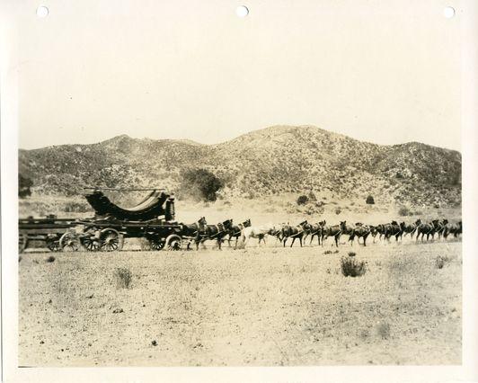 Aqueduct mule team