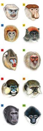 10 primate faces