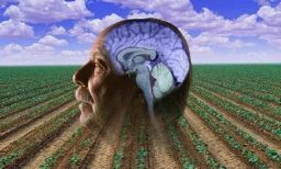 Pesticides and Parkinson's