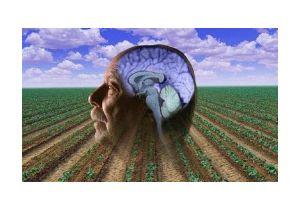 Pesticides and Parkinson's