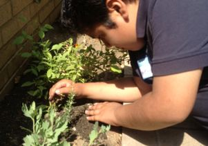 Youngster helps plant a medicinal garden at UCLA