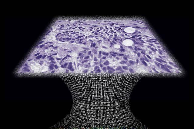 Lens Free Microscope image