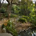 UCLA's Mildred E. Mathias Botanical Garden gets $5 million from Morton La Kretz