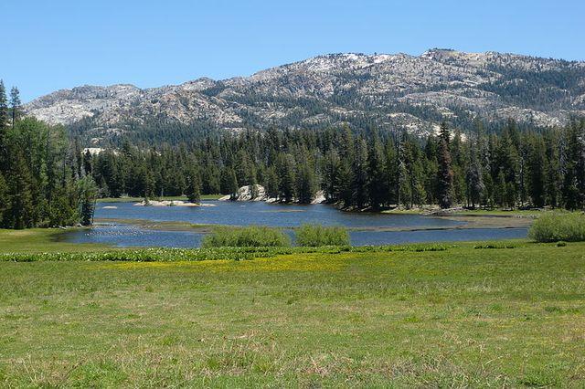 Calaveras Big Trees State Park, California, USA