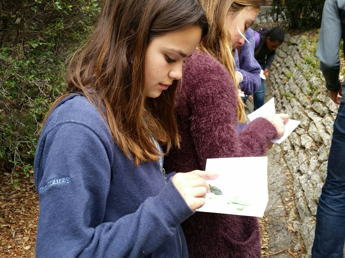 Students on a Wallace Walk