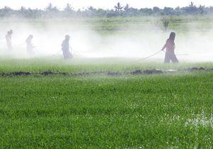 Pesticides in field