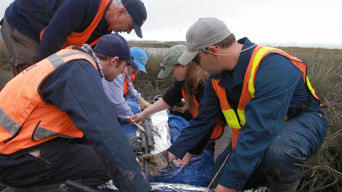 Marsh sediment sample
