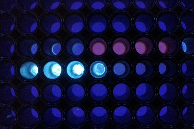 Assay signal generation