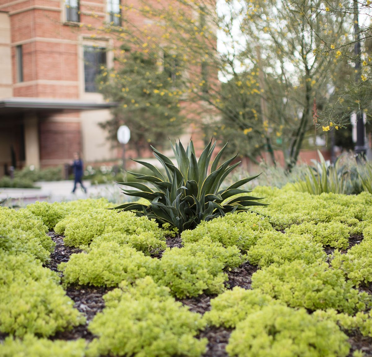 Landscaping around the UCLA Meyer and Renee Luskin Conference Center