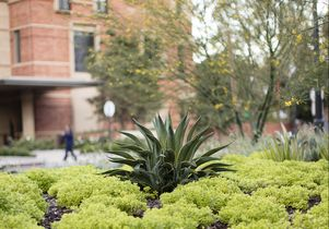 Click to open the large image: Landscaping around the UCLA Meyer and Renee Luskin Conference Center