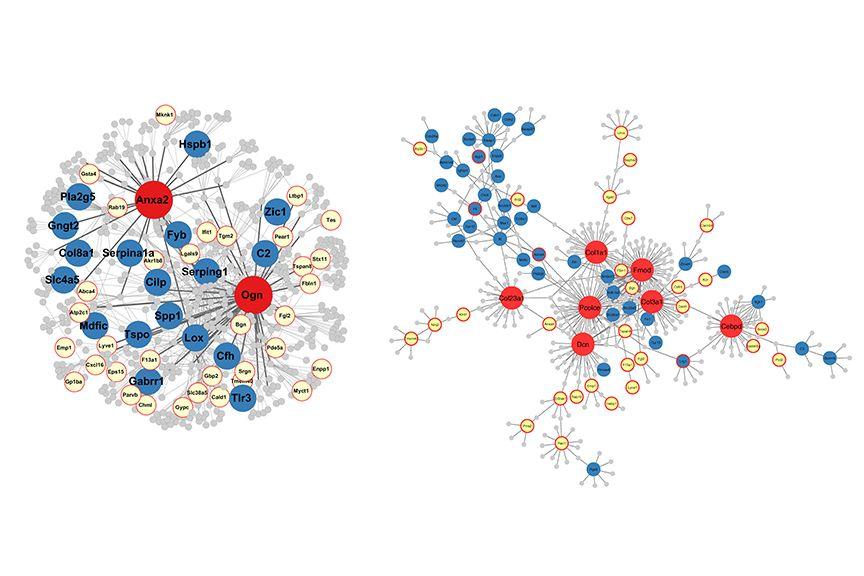 Gene networks