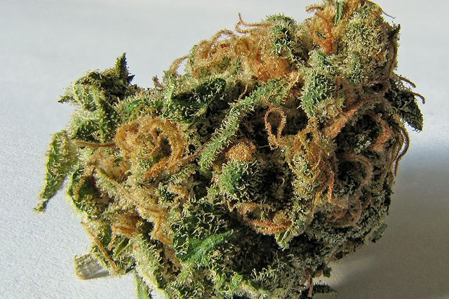 Cannibis bud