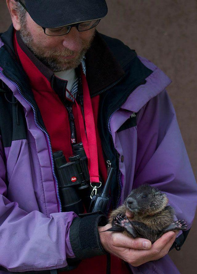 Dan Blumstein holds a marmot