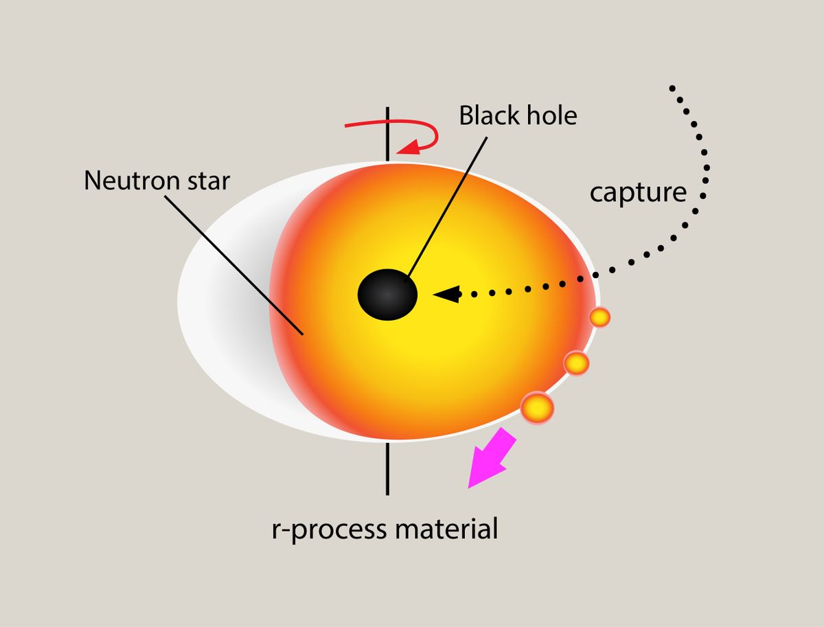 Black hole neutron star