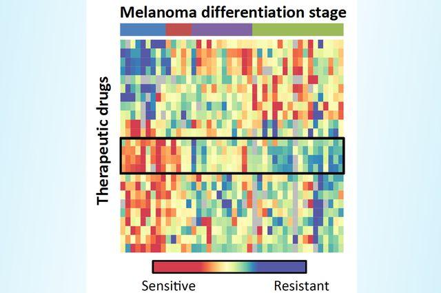 Melanoma drug resistance 2018