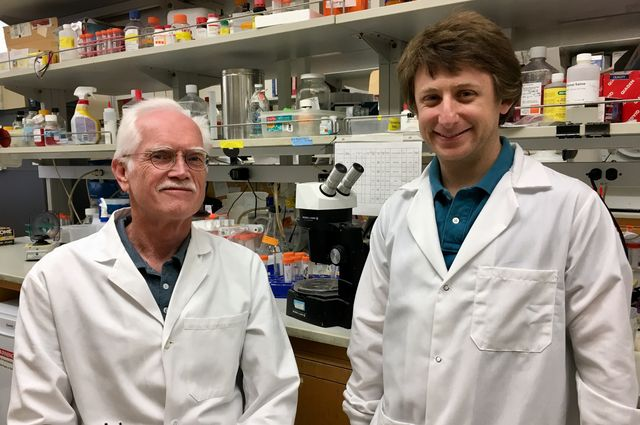 UCLA researchers Jake Lusis, left, and Marcus Seldin