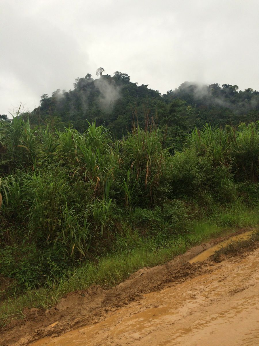 Cameroon forest