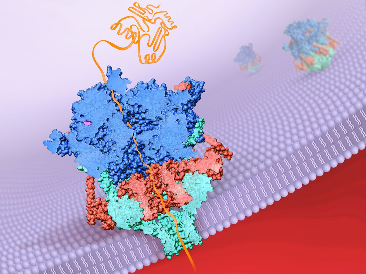 Protein image 3D