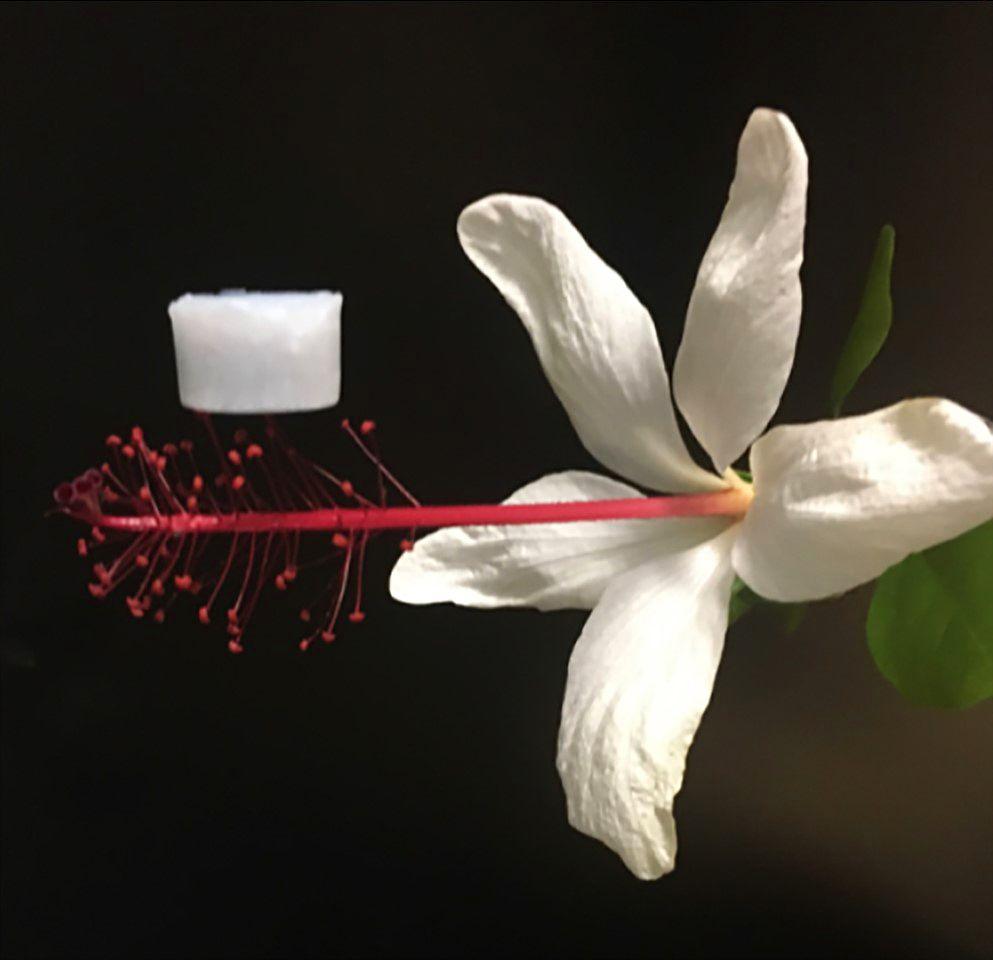 Ceramic aerogel on flower