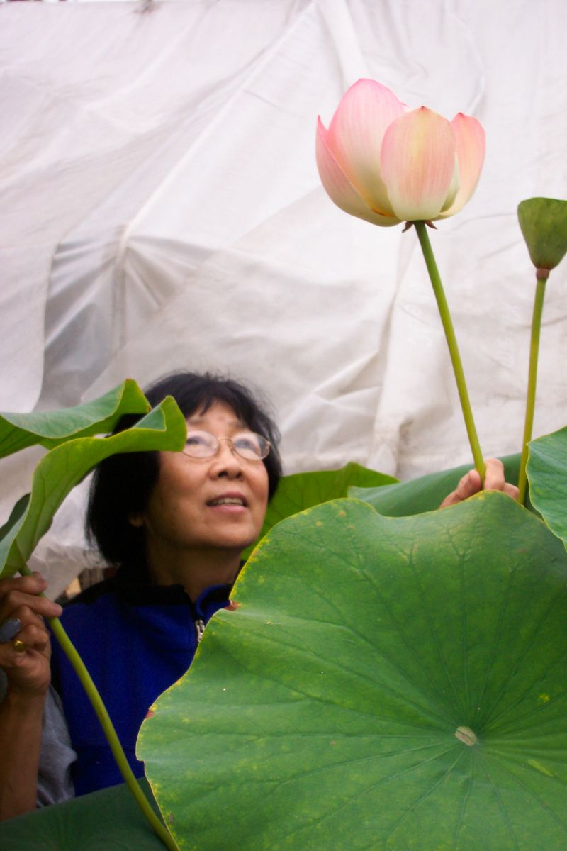 Jane Shen-Miller with the 'sacred lotus'