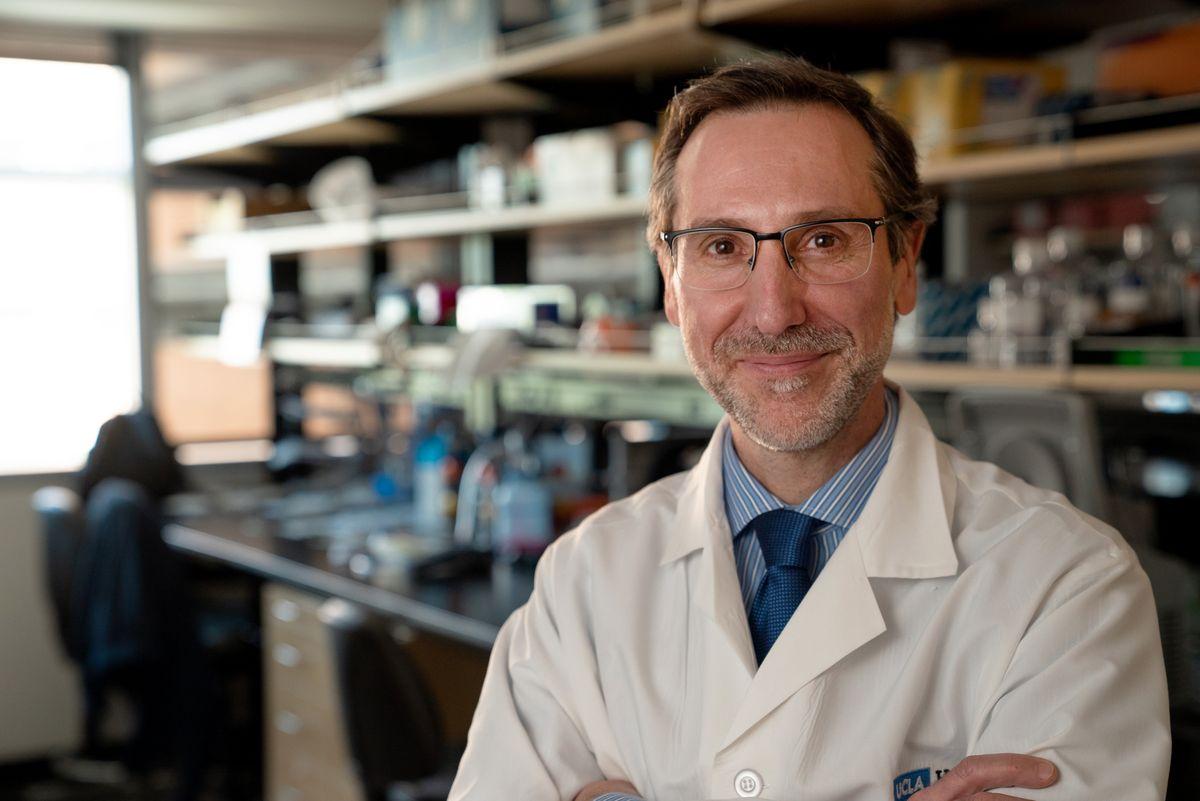 Dr. Antoni Ribas