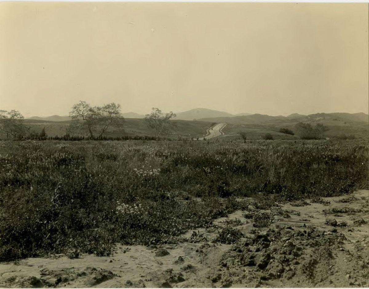 Westwood campus 1929