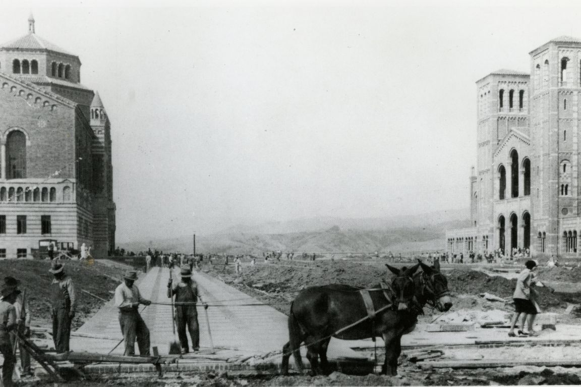 Mules and construction