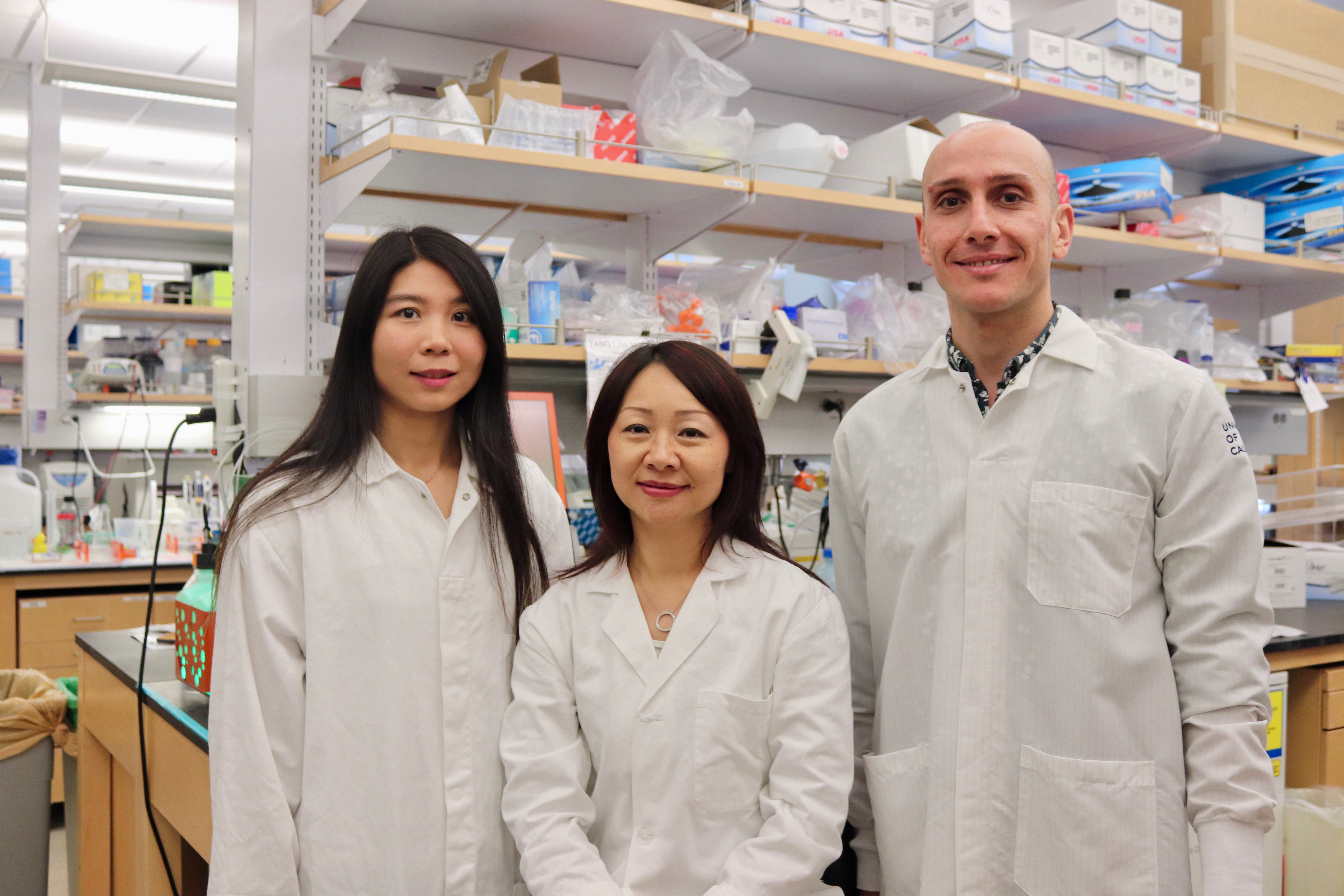 Creatine powers T cells' fight against cancer