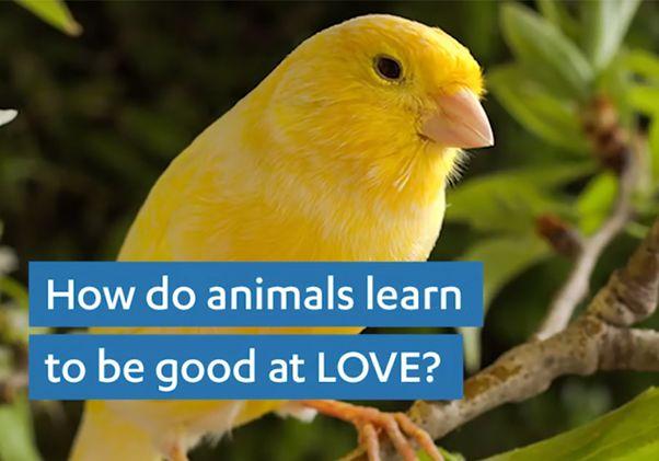 Animal courtship