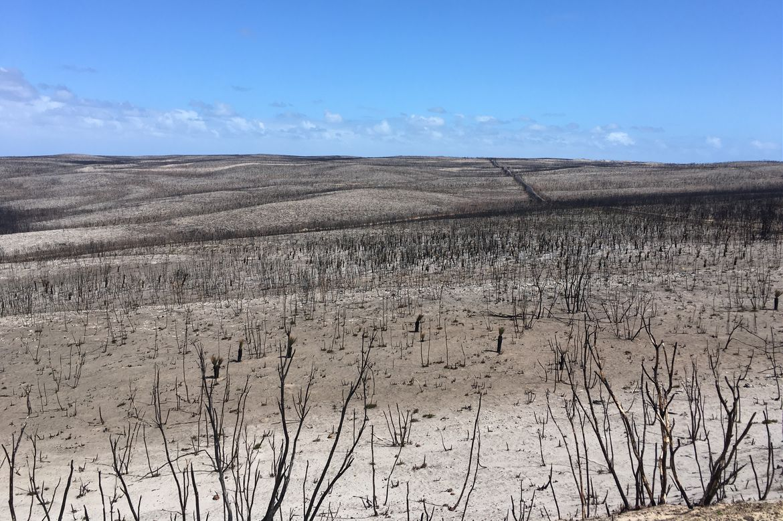 Kangaroo Island after fire