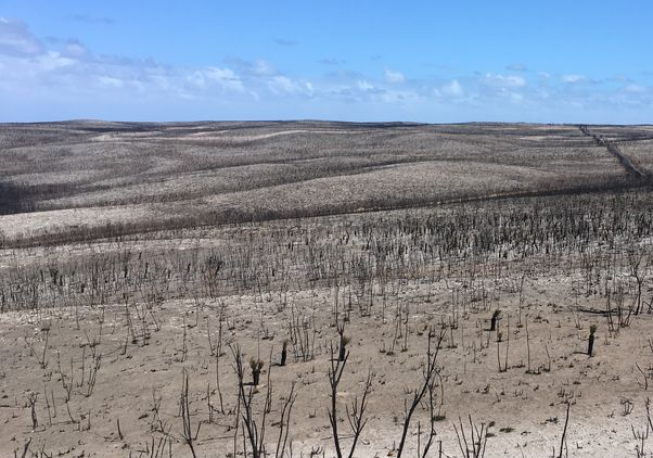 Kangaroo Island after fire