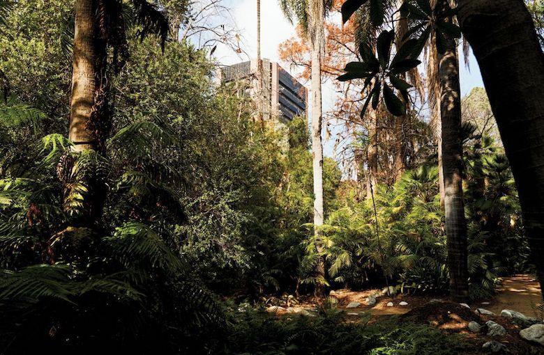 Urban oasis at UCLA Mildred E. Mathias Botanical Garden