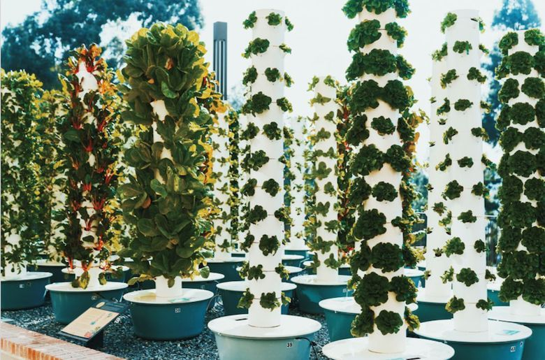 Tower Gardens at Sproul Landing