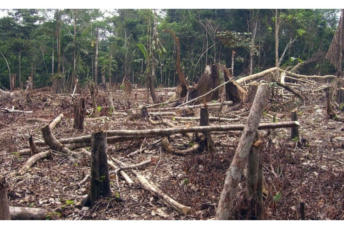 Deforestation in Colombia