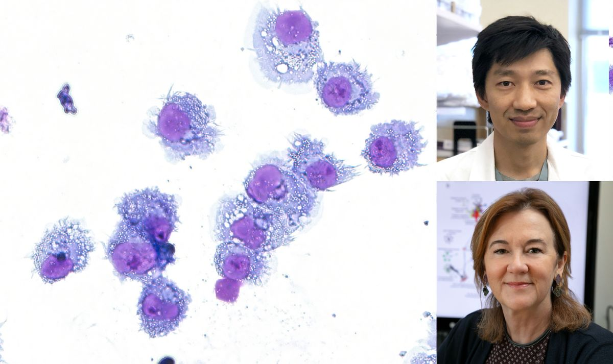 Dendritic cells composite with Dr. Christopher Seet and Dr. Gay Crooks
