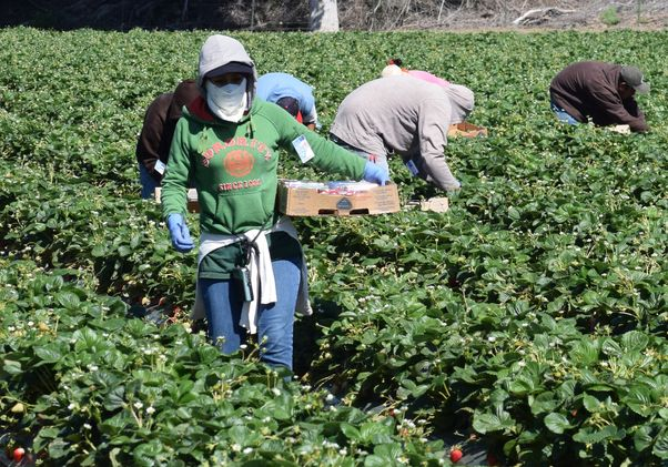 Agricultural workers in California