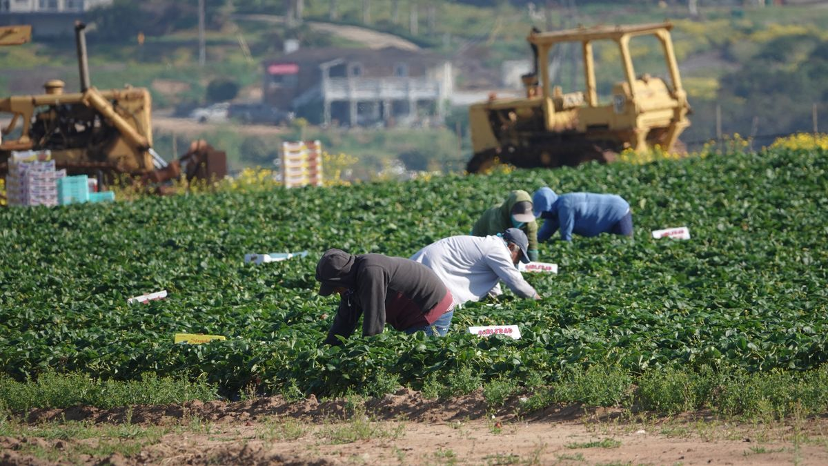 Agriculture workers in California