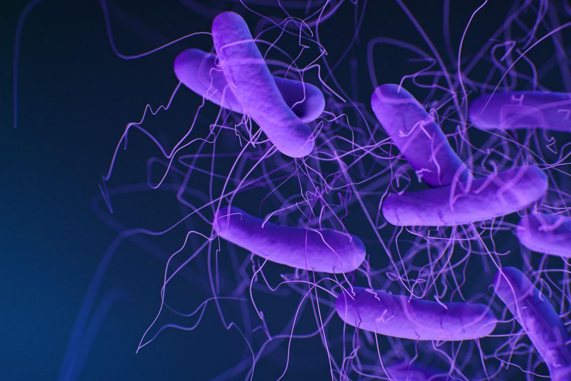 Clostridioides difficilebacteria