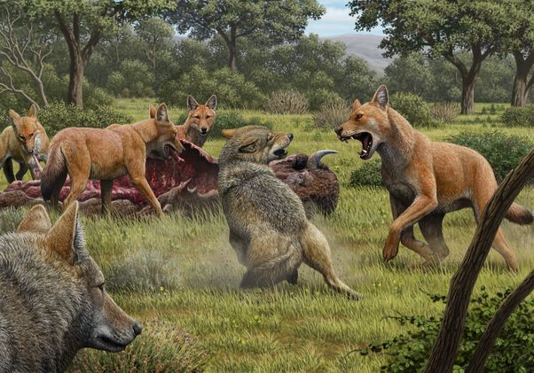 Artwork depicting two gray wolves confronting a pack of dire wolves