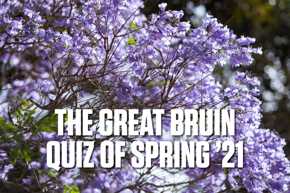 The Great Bruin Quiz of Spring '21