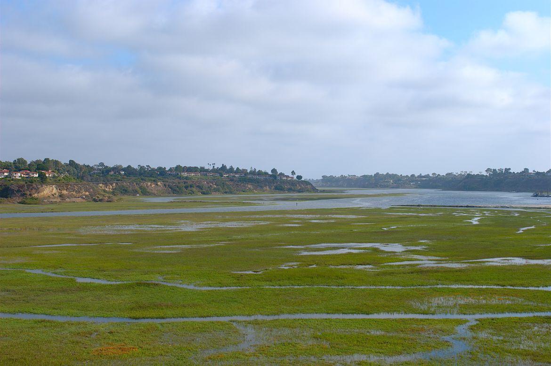 Algae bloom in Newport Bay
