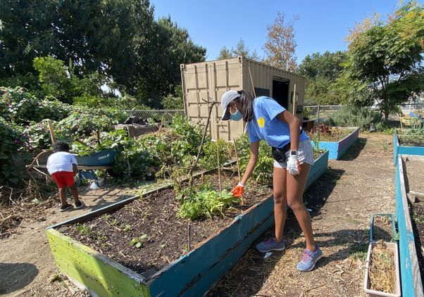 Click to open the large image: Amira Patrawala at the Fremont Community Garden